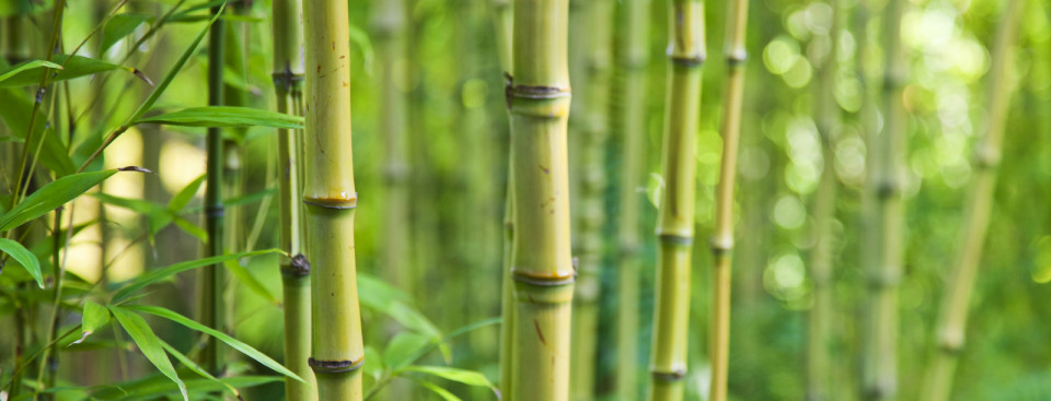 les avantages utiliser un plancher en bambou maison. Black Bedroom Furniture Sets. Home Design Ideas