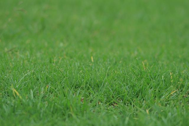 avoir une belle pelouse c est possible maison jardin. Black Bedroom Furniture Sets. Home Design Ideas