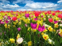 Réorganiser ou préparer son jardin au printemps