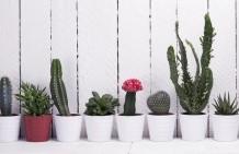 Jardin d'intérieur : 10 plantes à choisir ?