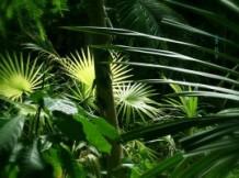 Imprimés luxuriants et couleurs de la jungle en déco